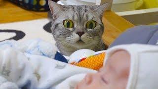 Трогательное знакомство кошек с новым членом семьи!
