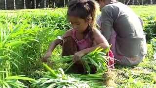 Khmer little girl