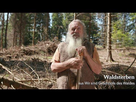 Das Waldsterben und unser entfremdetes Bewusstsein