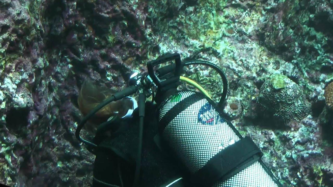 Blijdorp oceanium in HD