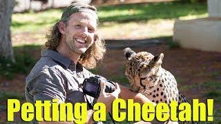 Petting a Cheetah!  - Otjitotongwe Cheetah Guest Farm Namibia