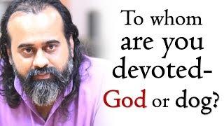 Acharya Prashant on Sri Ramakrishna: To whom are you devoted - God or dog?
