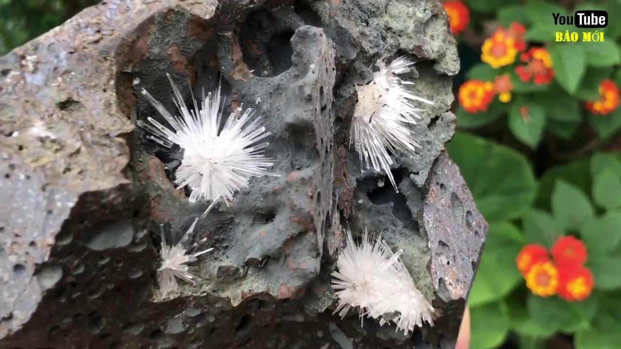 Chiêm ngưỡng loài hoa cực quý hiếm, 3000 năm mới nở một lần - Tin Tức Mới