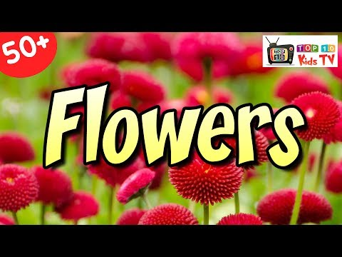 Learn Names Of Flowers | Flower Names In Animation Video | Learning Flower Names For Kids