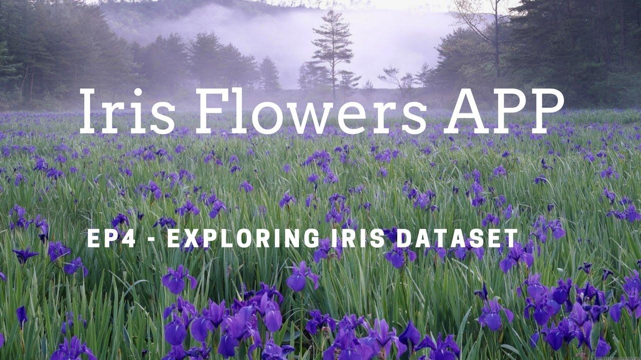 4 Iris Flowers Dataset Youtube