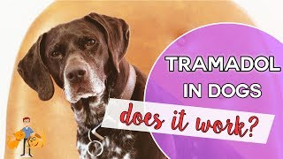 Tramadol: an effective pain killer for pets?