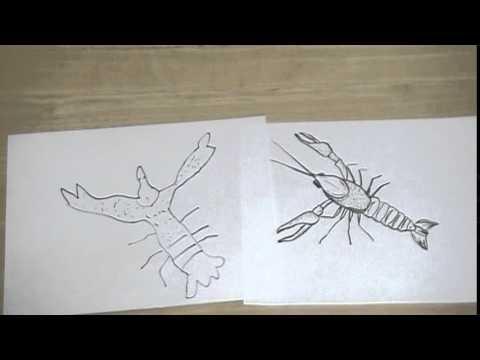 ザリガニの絵の描き方と方法とコツ Tips and methods of how to draw a picture of crayfish