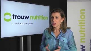 Beef cattle nutrition: Digestion and feed utilization