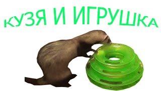 A ferret!!! Ferret pet!!! Ferrets playing!!! Хорек приколы!!! Хорек играет!!! Приколы хорьки!!!
