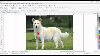 Dog Logo 1: How to extract the outline of a photo in Corel Draw(This is the first of a 2 part video of designing a logo using Corel Draw. Here you will learn how to use Colel Photopaint Cut Out Lab and the bezier tool in Corel ..., 2014-10-11T20:41:52.000Z)