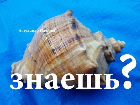 Вопрос: Как в Черном море появились ракушки рапана?