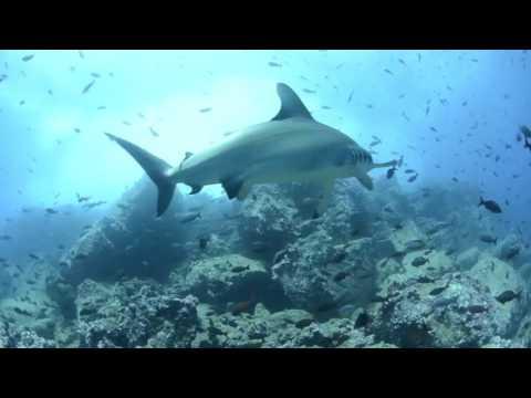 Pristine Seas National Geographic
