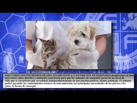 curso-universitario-dietetica-nutricion-veterinaria---cursos-online