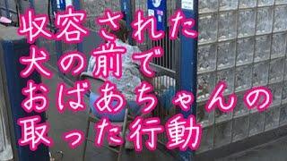 【感動】保護施設に収容された犬の前で、おばあちゃんの取った行動に目頭が熱くなる