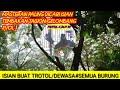 Masteran Paling Dicari Terupdate Tembakan Tawon  Mp3 - Mp4 Download