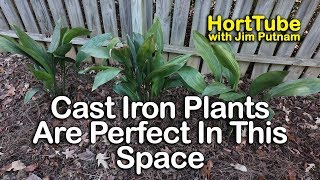 Cast Iron Plants Are Perfect For This Space
