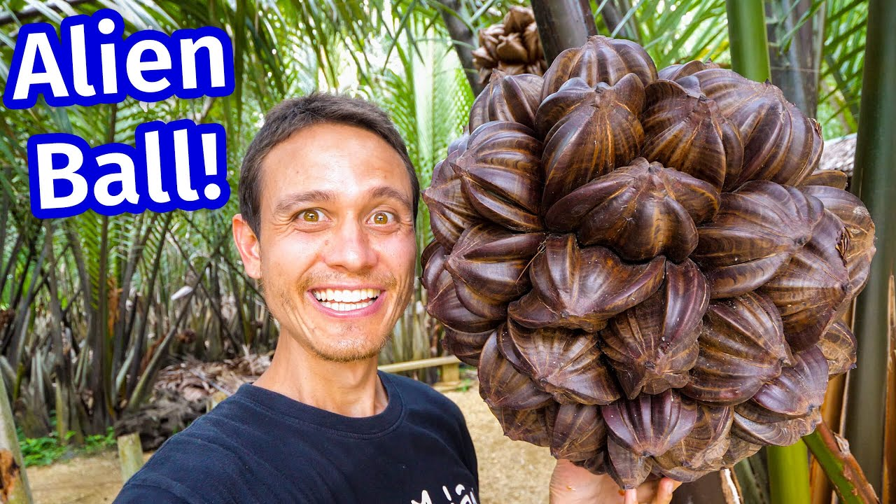 Amazing Food - ALIEN SPIKY BALL!! You Won't Believe How They EAT This!!