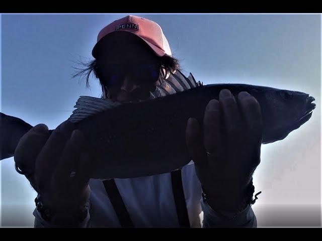 SPIGOLE A BOLOGNESE: mar fishing - spigole 1- 2