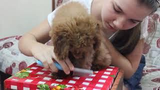 Как причёсывать собаку