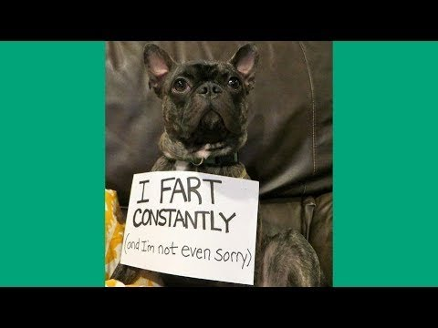 [Oh My Dog] Funniest French Bulldog Videos - Compilation 2017 #7