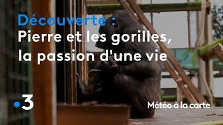 Pierre et les gorilles, la passion d'une vie - Météo à la carte