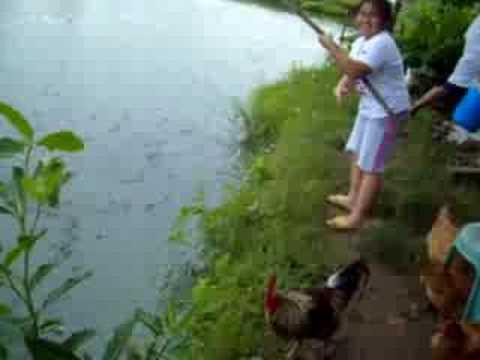Tilapia - Fish Farming in the Philippines
