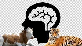 [융복합프로젝트]동물농장 - 정신감정이필요시되는동물농장