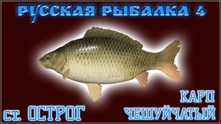 РР4 СТАРЫЙ ОСТРОГ КАРП РУССКАЯ РЫБАЛКА 4 СТАРЫЙ ОСТРОГ КАРП RUSSIAN FISHING 4 COMMON CARP