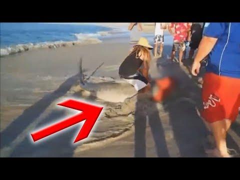 Акулу выбросило на берег. То что с ней сделали люди поражает...