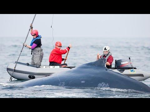Whale Rescue!