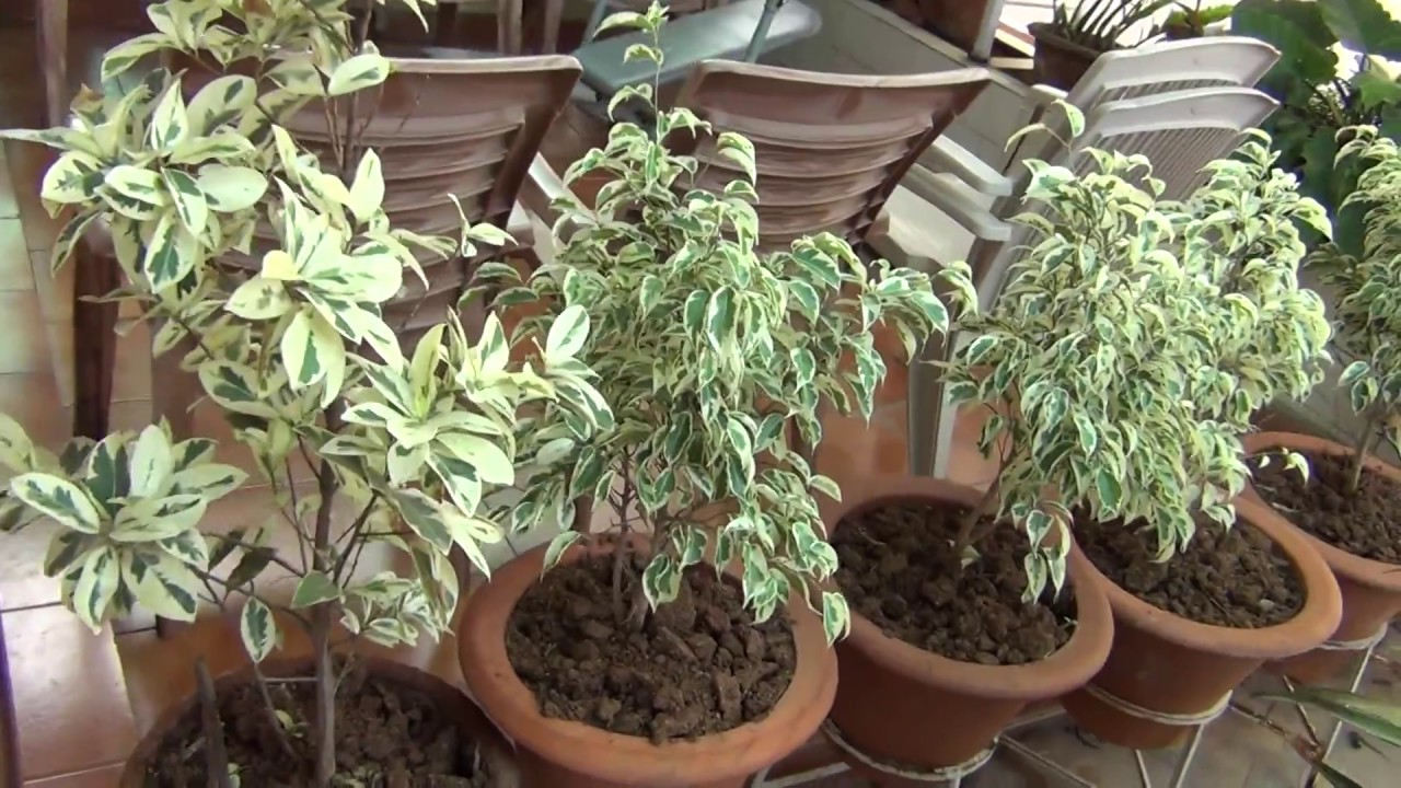How To Make A Terrace Garden - How to make terrace garden look beautiful holy mary ferozguda