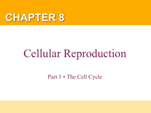 chapter 8 cell reproduction Chapter 8 the cellular basis of reproduction and inheritance 2) which of the following statements regarding sexual and asexual reproduction is true a) cell division only occurs after sexual reproduction.