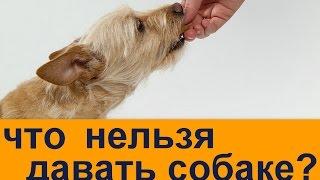 что нельзя давать собаке