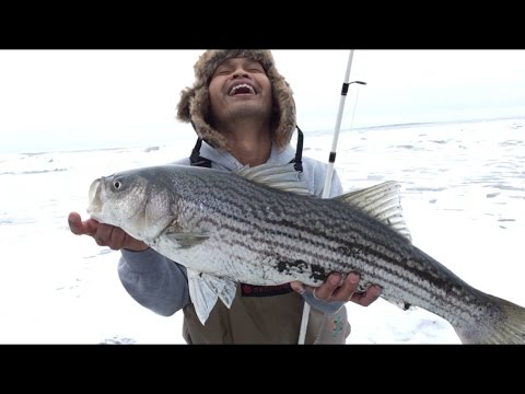 Striped Bass Fishing Caught A 30 Striper And A