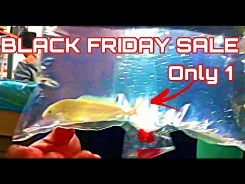 BLACK FRIDAY SALE *EVERYTHING IN STOCK* 10%-20% OFF ALL FISH STOCK