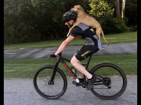 """I found this dog, he rode on my back for over seven miles, how cool is that,"" says cyclist."