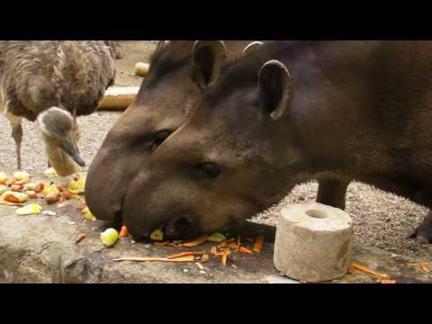 Svedski sto u Beo Zoo Vrt-u
