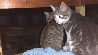 Если вы не любите котов  - то не смотрите это видео .(24.09.20)