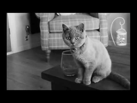 #1 Head Banging Cat