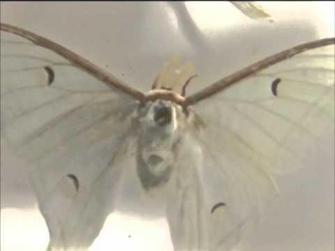 India's first insect museum to come up in southern city