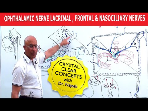 Mandibular Nerve | Formation | Course | Relations | Branches.