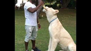 Kevin Hart and a $37M LION!