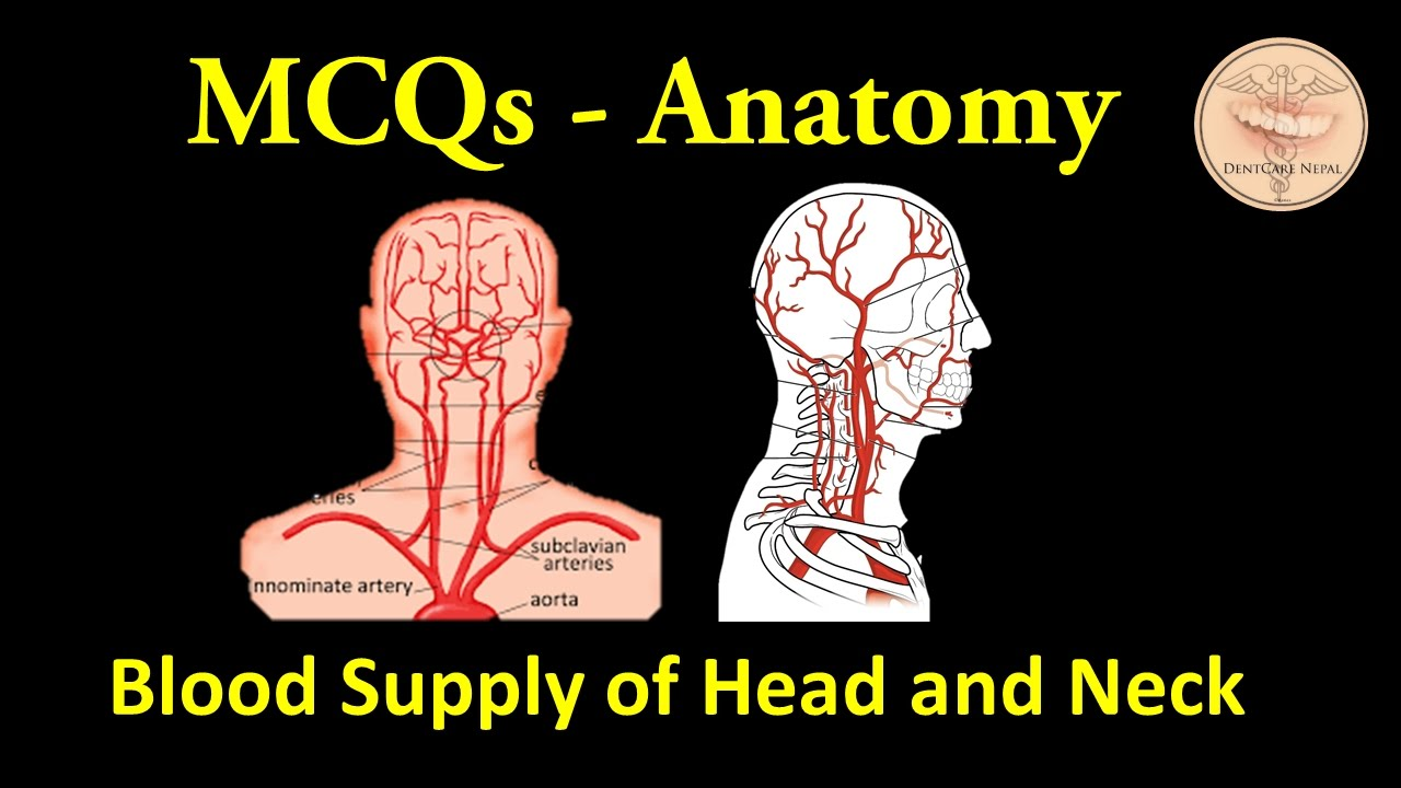 MCQs on Blood Supply of Head and Neck - Anatomy MCQs for NBDE, NDEB ...