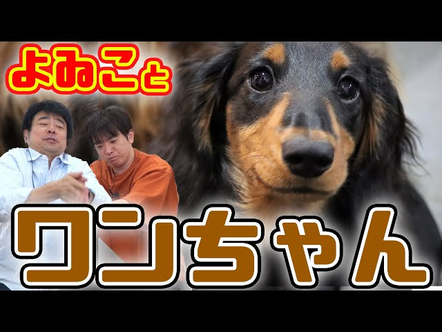 よゐことワンちゃんの配信!かわいい犬の写真でバズりたい!