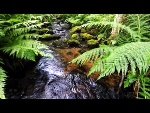 10 hours Relaxing Flute Music mix ♫waterstream, birds, chimes 🎧 relax, sleep, meditation
