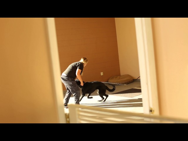 Dogs Who Serve- Creative Problem Solving in Dog Training