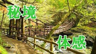 日本三大秘境の一つ、徳島県奥祖谷地方に架かる奥祖谷二重かずら橋と人...