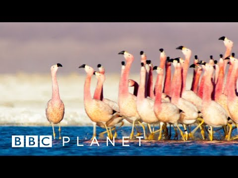 Five New BBC Earth Documentaries Coming