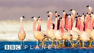 One Planet: Seven Worlds | Perfect Planet | Frozen Planet II | Green Planet | Planet Earth III