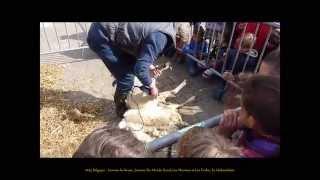 2015 Belgique   Louvain la Neuve, Journée Du Monde Rural, Les Moutons et Les Écoles, by HabariSalam